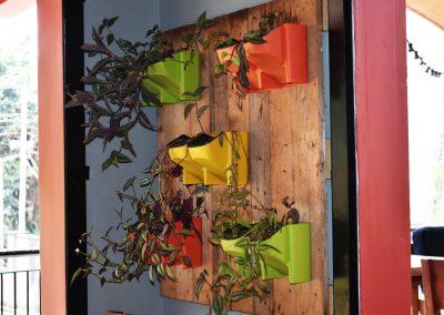 mahali_guesthouse_plants